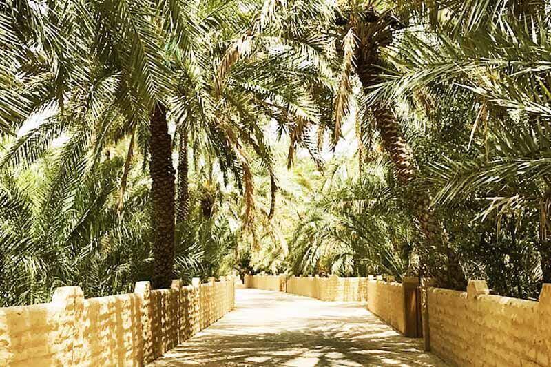 Al Ain Oasis - Luxuria Tours & Events