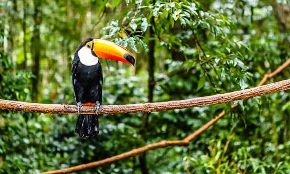 Amazon Bird's Brazil - Luxuria Tours & Events
