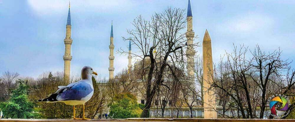 Blue Mosque Istanbul, Turkey - Luxuria Tours & Events