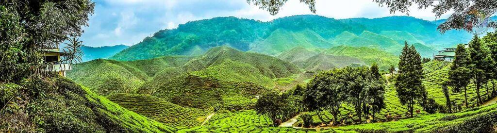 Cameron Highland-Tea Farms-Malaysia - Luxuria Tours & Events