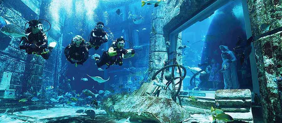 Lost Chamber Aquarium - Luxuria Tours & Events