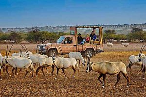 Sir Bani Yas Island Tour - Luxuria Tours & Events